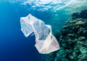 Las basuras marinas, un problema transversal